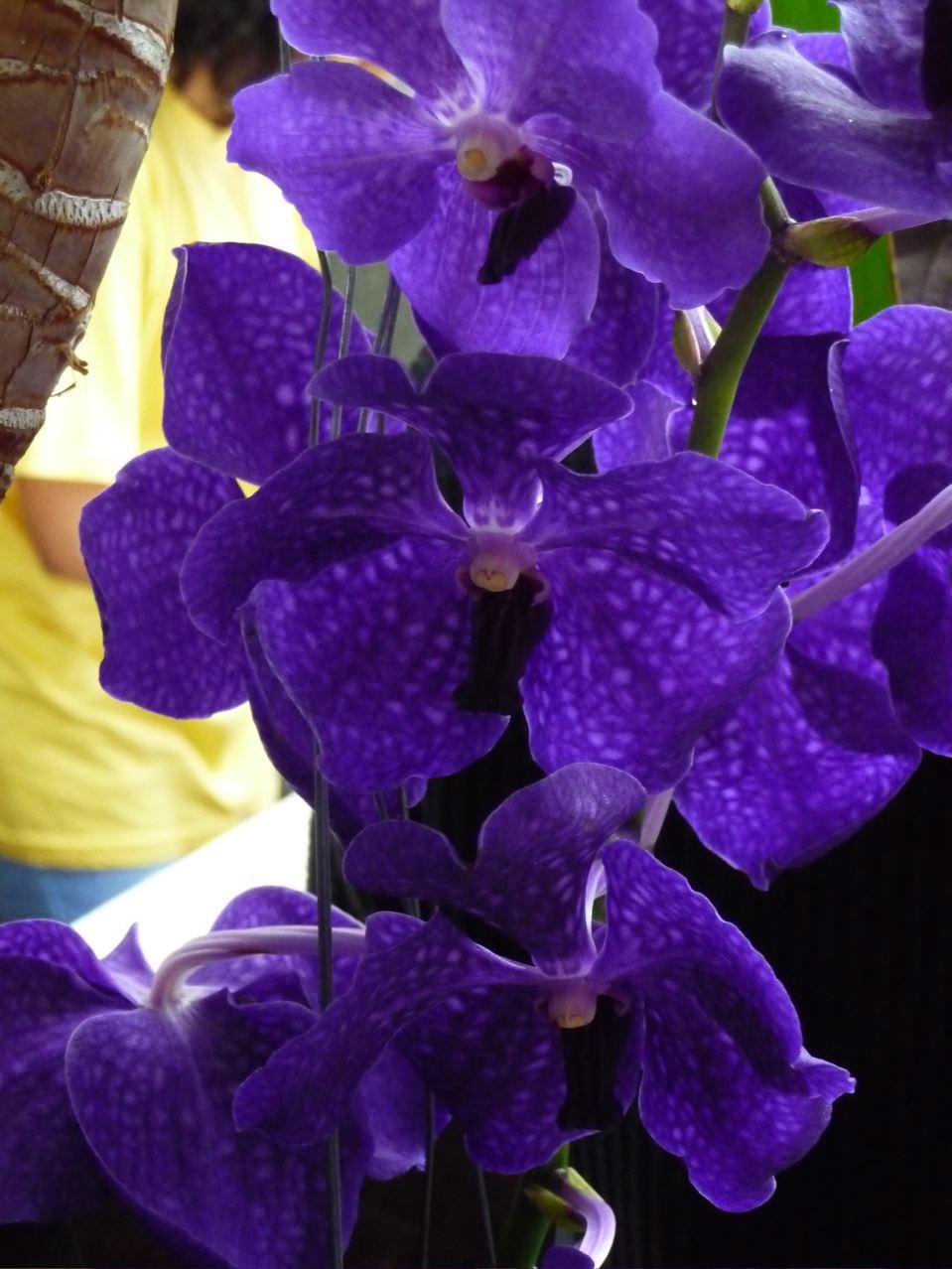 Conseil Feng Shui: Des Orchidées pour la Prospérité!
