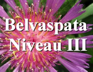 Séminaire en ligne d'Initiation au Belvaspata Niveau III