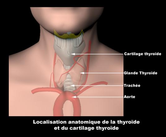 L'Hypothyroïdie: Conséquence de l'ingestion de Fluor