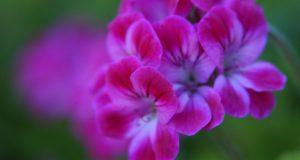 flowers-940x500