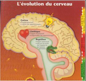 Application du Concept de Cerveau Triune en Thérapie